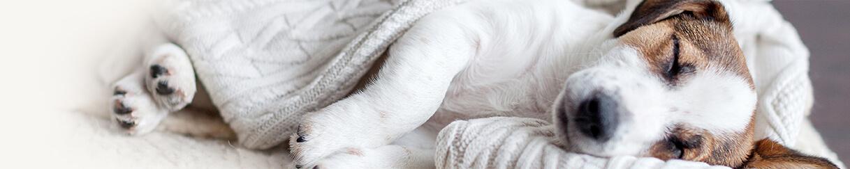 kremacja zwierząt cennik szczecin